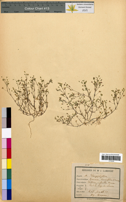 http://bibliotheque-virtuelle.clermont-universite.fr/files/fichiers_bcu/Arenaria_tenuifolia_CLF094582.jpg