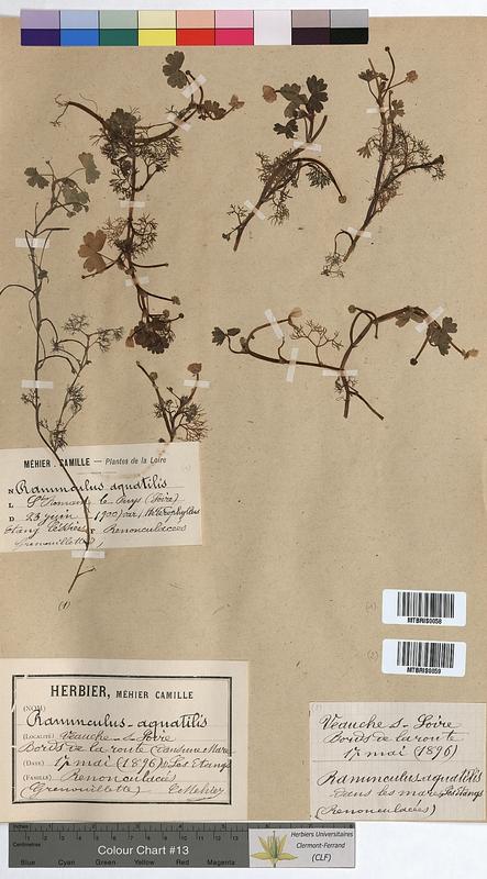 http://bibliotheque-virtuelle.clermont-universite.fr/files/fichiers_bcu/Ranunculus_aquatilis_MTBRIS0058.jpg
