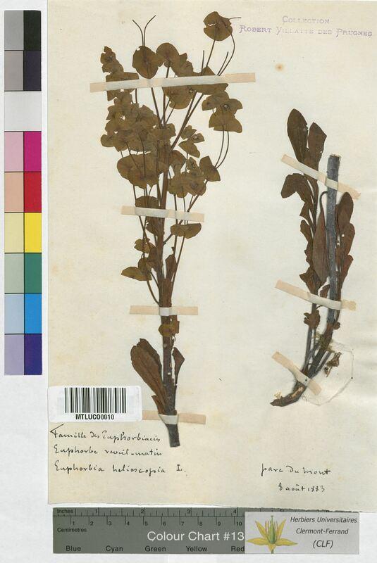 http://bibliotheque-virtuelle.clermont-universite.fr/files/fichiers_bcu/Euphorbia_helioscopia_MTLUCO0010.jpg