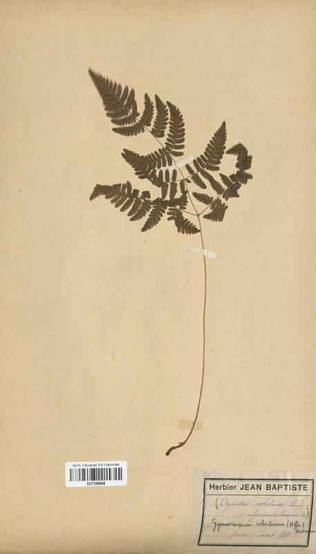 https://bibliotheque-virtuelle.bu.uca.fr/files/fichiers_bcu/Dryopteridaceae_Dryopteris_robertiana_CLF120043.jpg