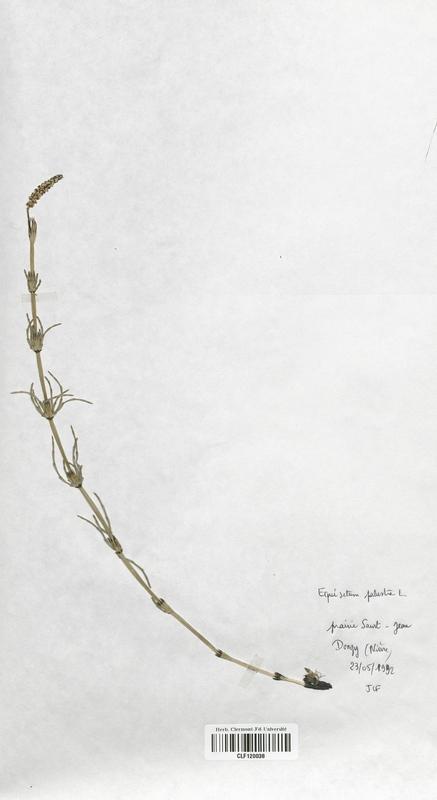 https://bibliotheque-virtuelle.bu.uca.fr/files/fichiers_bcu/Equisetaceae_Equisetum_palustre_CLF120038.jpg
