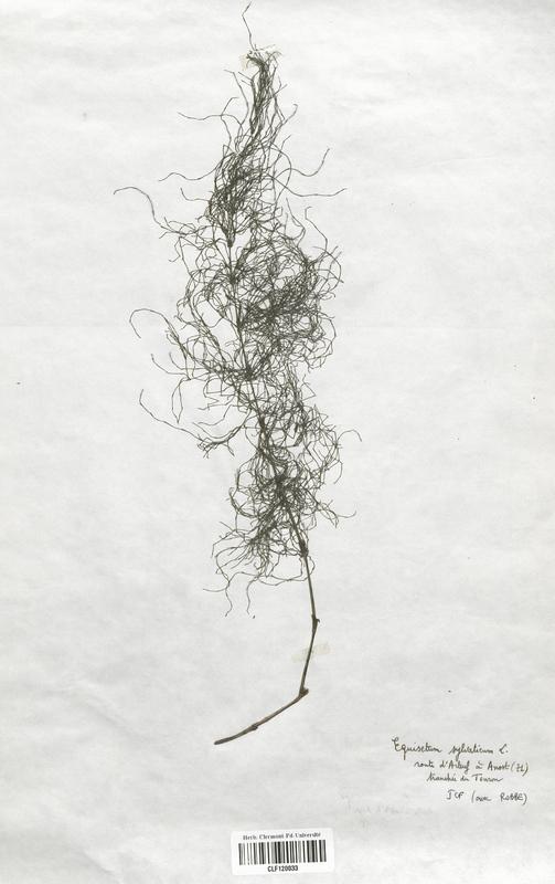 https://bibliotheque-virtuelle.bu.uca.fr/files/fichiers_bcu/Equisetaceae_Equisetum_sylvaticum_CLF120033.jpg