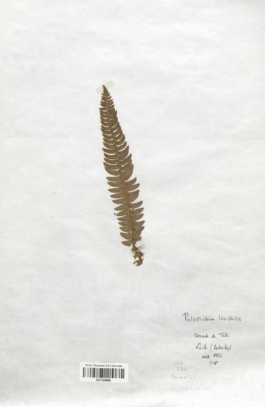https://bibliotheque-virtuelle.bu.uca.fr/files/fichiers_bcu/Dryopteridaceae_Polystichum_lonchitis_CLF120063.jpg