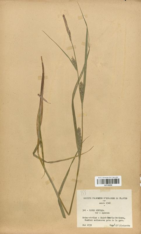 https://bibliotheque-virtuelle.bu.uca.fr/files/fichiers_bcu/Cyperaceae_Carex_hirta_CLF120259.jpg