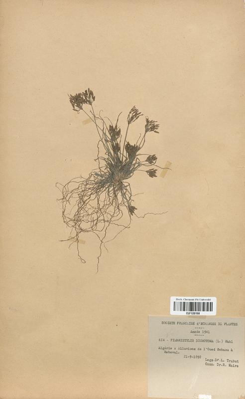 https://bibliotheque-virtuelle.bu.uca.fr/files/fichiers_bcu/Cyperaceae_Fimbristylis_dichotoma_CLF120150.jpg