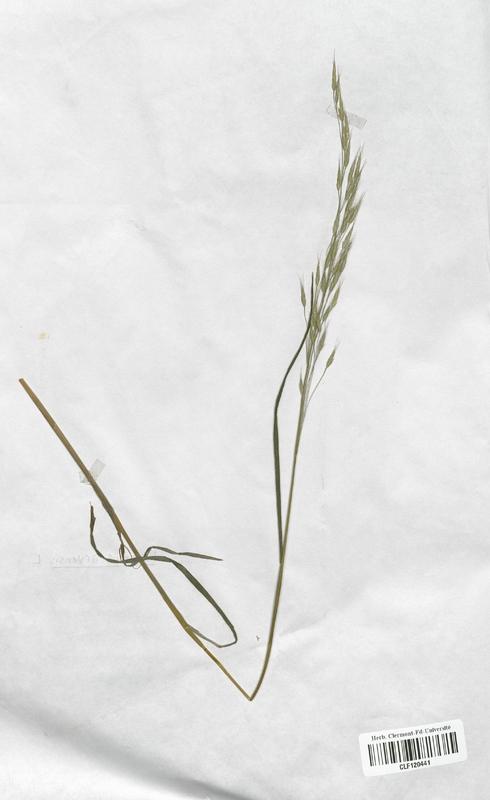 https://bibliotheque-virtuelle.bu.uca.fr/files/fichiers_bcu/Poaceae_Bromus_arvensis_CLF120441.jpg