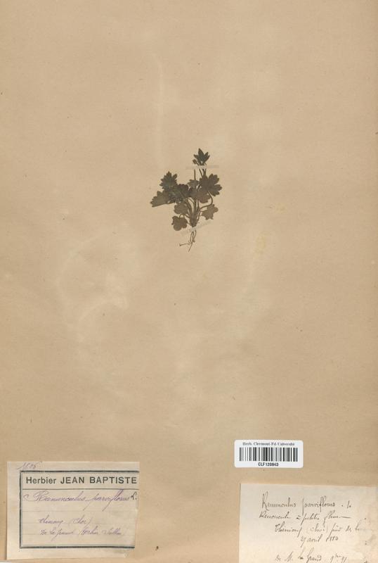 https://bibliotheque-virtuelle.bu.uca.fr/files/fichiers_bcu/Renonculaceae_Ranunculus_parviflorus_CLF120843.jpg