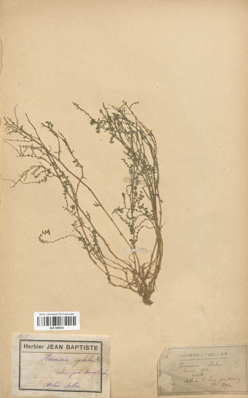 https://bibliotheque-virtuelle.bu.uca.fr/files/fichiers_bcu/Caryophyllaceae_Herniaria_glabra_CLF120913.jpg