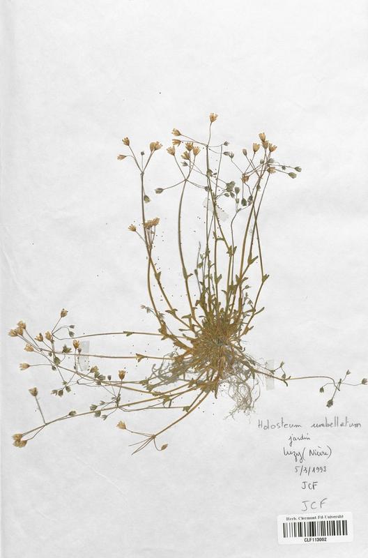 https://bibliotheque-virtuelle.bu.uca.fr/files/fichiers_bcu/Caryophyllaceae_Holosteum_umbellatum_CLF113002.jpg