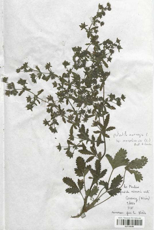 https://bibliotheque-virtuelle.bu.uca.fr/files/fichiers_bcu/Rosaceae_Potentilla_norvegica_monspeliensis_CLF113185.jpg