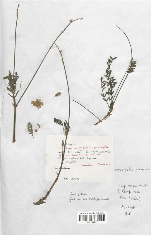 https://bibliotheque-virtuelle.bu.uca.fr/files/fichiers_bcu/Fabaceae_Onobrychis_arenaria_CLF113357.jpg
