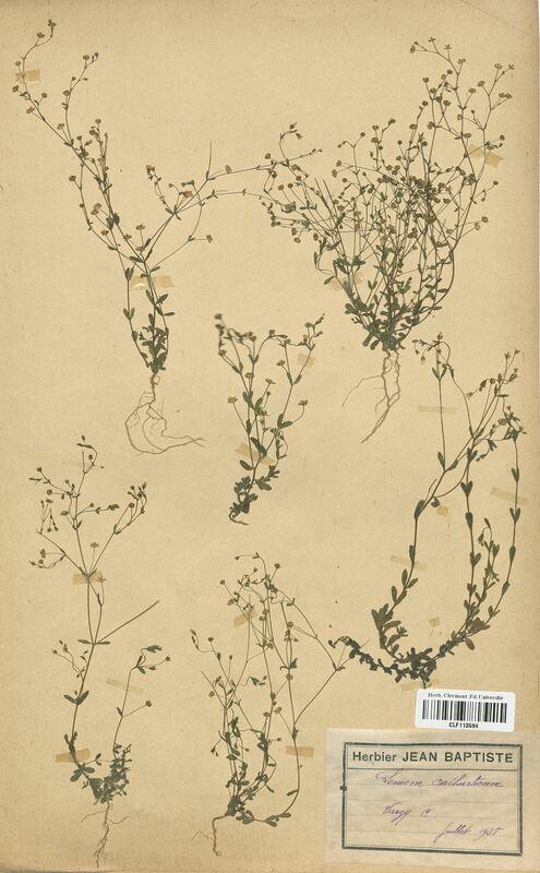 https://bibliotheque-virtuelle.bu.uca.fr/files/fichiers_bcu/Linaceae_Linum_catharticum_CLF113594.jpg