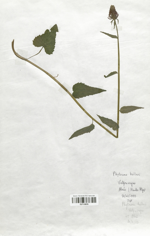 https://bibliotheque-virtuelle.bu.uca.fr/files/fichiers_bcu/Campanulaceae_Phyteuma_halleri_CLF113976.jpg