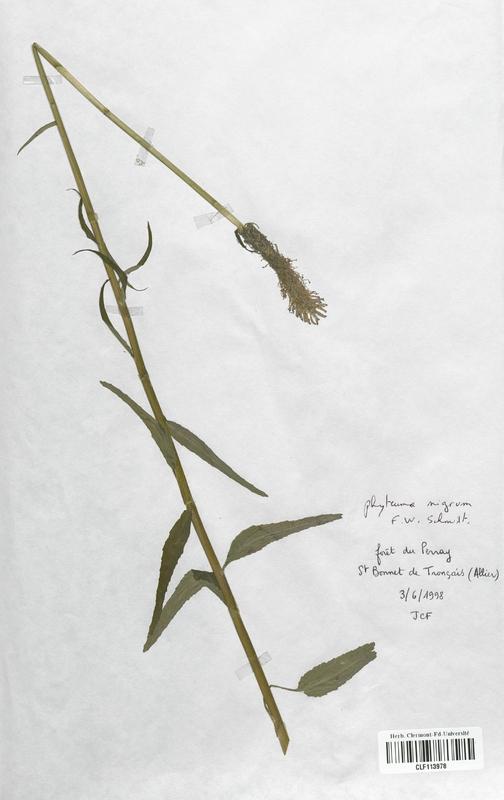 https://bibliotheque-virtuelle.bu.uca.fr/files/fichiers_bcu/Campanulaceae_Phyteuma_nigrum_CLF113978.jpg
