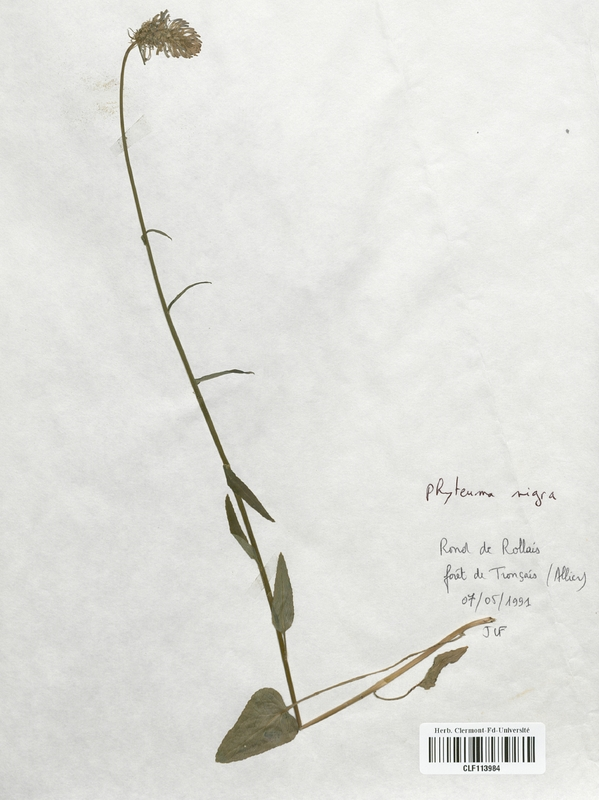 https://bibliotheque-virtuelle.bu.uca.fr/files/fichiers_bcu/Campanulaceae_Phyteuma_nigra_CLF113984.jpg