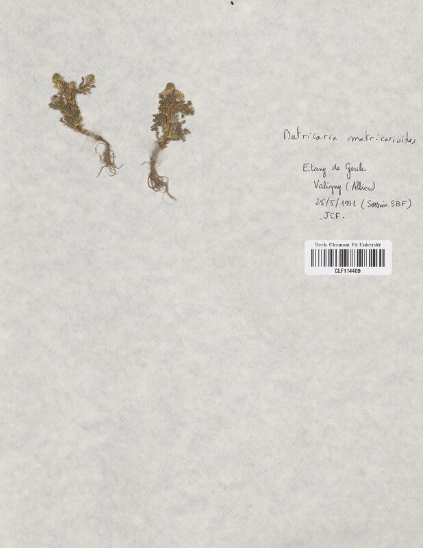 https://bibliotheque-virtuelle.bu.uca.fr/files/fichiers_bcu/Asteraceae_Matricaria_matricarioides_CLF114409.jpg