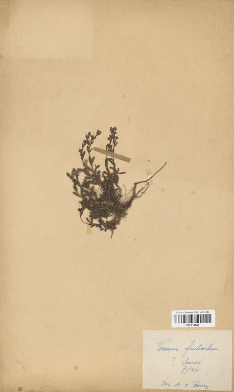 https://bibliotheque-virtuelle.bu.uca.fr/files/fichiers_bcu/Scrophulariaceae_Veronica_fruticans_CLF114554.jpg