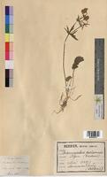 http://bibliotheque-virtuelle.clermont-universite.fr/files/fichiers_bcu/Ranunculus_auricomus_MTBRIS0074.jpg
