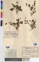 http://bibliotheque-virtuelle.clermont-universite.fr/files/fichiers_bcu/Viola_reichenbachiana_MTBRIS0203.jpg