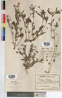 http://bibliotheque-virtuelle.clermont-universite.fr/files/fichiers_bcu/Viola_tricolor_MTBRIS0218.jpg