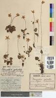 http://bibliotheque-virtuelle.clermont-universite.fr/files/fichiers_bcu/Parnassia_palustris_MTBRIS0350.jpg