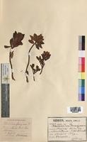 http://bibliotheque-virtuelle.clermont-universite.fr/files/fichiers_bcu/Rhododendron_ferrugineum_MTBRIS0554.jpg