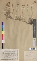 http://bibliotheque-virtuelle.clermont-universite.fr/files/fichiers_bcu/Artemisia_glacialis_MTBRIS1088.jpg