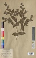 http://bibliotheque-virtuelle.clermont-universite.fr/files/fichiers_bcu/Euphorbia_lathyris_MTBRIS1815.jpg