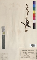 http://bibliotheque-virtuelle.clermont-universite.fr/files/fichiers_bcu/Ophrys_aranifera_MTBRIS2039.jpg