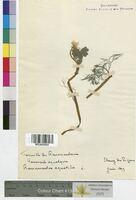 http://bibliotheque-virtuelle.clermont-universite.fr/files/fichiers_bcu/Ranunculus_aquatilis_MTLUCO0093.jpg