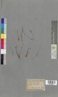 http://bibliotheque-virtuelle.clermont-universite.fr/files/fichiers_bcu/Primula_grandiflora_MTLUCO0438.jpg