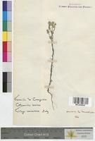 http://bibliotheque-virtuelle.clermont-universite.fr/files/fichiers_bcu/Centaurea_jacea_MTLUCO0636.jpg