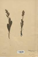 https://bibliotheque-virtuelle.bu.uca.fr/files/fichiers_bcu/Orchidaceae_Dactylorhiza_sambucina_CLF120622.jpg