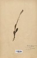 https://bibliotheque-virtuelle.bu.uca.fr/files/fichiers_bcu/Orchidaceae_Pseudorchis_albida_CLF120628.jpg