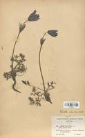 https://bibliotheque-virtuelle.bu.uca.fr/files/fichiers_bcu/Renonculaceae_Pulsatilla_rubra_CLF120873.jpg