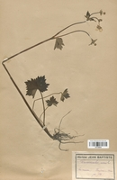 https://bibliotheque-virtuelle.bu.uca.fr/files/fichiers_bcu/Renonculaceae_Ranunculus_acris_CLF120846.jpg