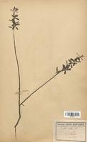 https://bibliotheque-virtuelle.bu.uca.fr/files/fichiers_bcu/Salicaceae_Salix_alba_CLF120721.jpg