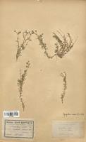 https://bibliotheque-virtuelle.bu.uca.fr/files/fichiers_bcu/Caryophyllaceae_Spergularia_media_CLF120934.jpg