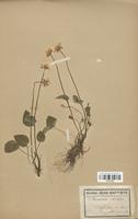 https://bibliotheque-virtuelle.bu.uca.fr/files/fichiers_bcu/Saxifragaceae_Parnassia_palustris_CLF113152.jpg