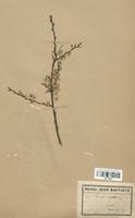 https://bibliotheque-virtuelle.bu.uca.fr/files/fichiers_bcu/Malaceae_Prunus_spinosa_CLF113215.jpg