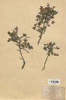 https://bibliotheque-virtuelle.bu.uca.fr/files/fichiers_bcu/Rosaceae_Rosa_pimpinellifolia_CLF113115.jpg