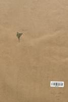https://bibliotheque-virtuelle.bu.uca.fr/files/fichiers_bcu/Saxifragaceae_Saxifraga_stellaria_CLF113171.jpg