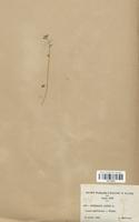 https://bibliotheque-virtuelle.bu.uca.fr/files/fichiers_bcu/Brassicaceae_Cochlearia_danica_CLF113312.jpg