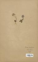 https://bibliotheque-virtuelle.bu.uca.fr/files/fichiers_bcu/Brassicaceae_Thlaspi_rotundifolium_CLF113307.jpg