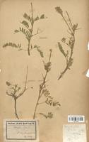 https://bibliotheque-virtuelle.bu.uca.fr/files/fichiers_bcu/Fabaceae_Astragalus_pilosus_CLF113436.jpg