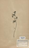 https://bibliotheque-virtuelle.bu.uca.fr/files/fichiers_bcu/Geraniaceae_Geranium_dissectum_CLF113621.jpg