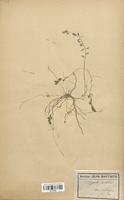 https://bibliotheque-virtuelle.bu.uca.fr/files/fichiers_bcu/Polygalaceae_Polygala_vulgaris_CLF113606.jpg
