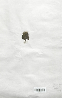 https://bibliotheque-virtuelle.bu.uca.fr/files/fichiers_bcu/Lamiaceae_Teucrium_pyrenaicum_CLF113752.jpg