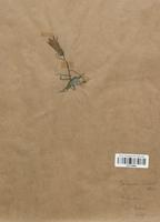 https://bibliotheque-virtuelle.bu.uca.fr/files/fichiers_bcu/Campanulaceae_Campanula_alpestris_CLF113985.jpg