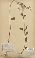 https://bibliotheque-virtuelle.bu.uca.fr/files/fichiers_bcu/Onagraceae_Epilobium_roseum_CLF113920.jpg